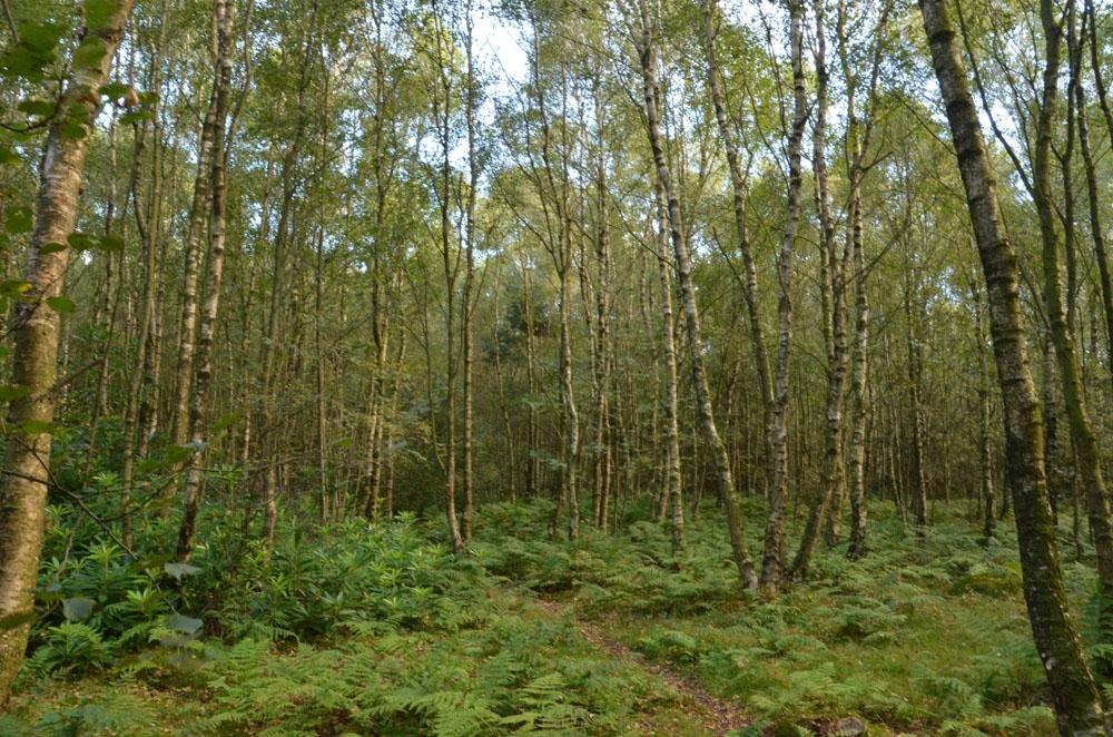 Pease Wood Sold Loftus Saltburn By Sea Cleveland