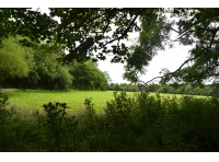 View across neighbouring pasture to the wood.