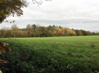 View of the southern edge of the wood, across the field