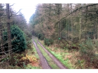 Main shared track, Riggs Wood to the right.