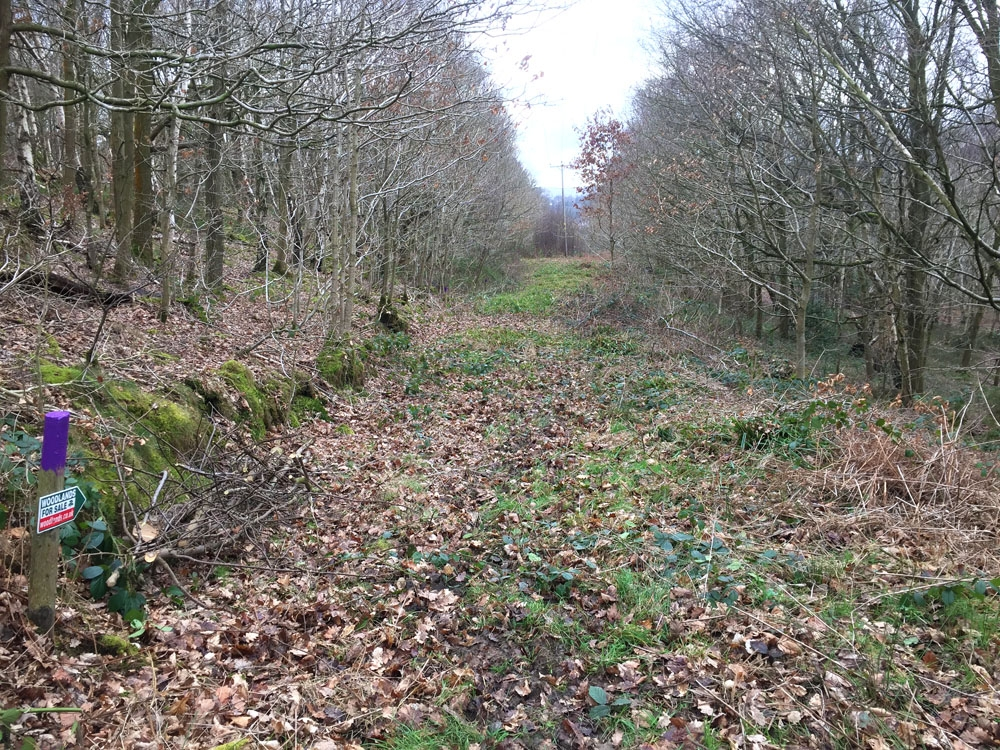 Rocher Wood