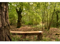 A rustic bench in a clearing, beneath a large oak.