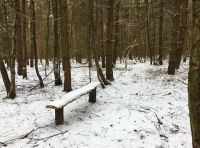 Bench located in the wood.