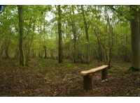 Bench in a clearing with hazel coppice nearby.
