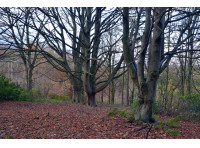 Whinney Wood - SOLD