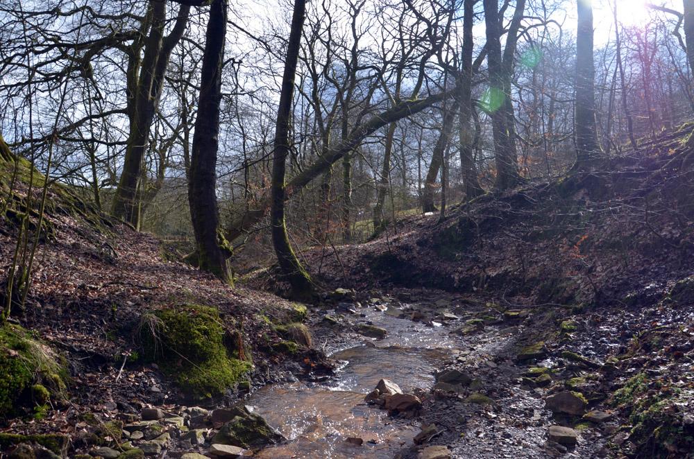 A tumbling stream.