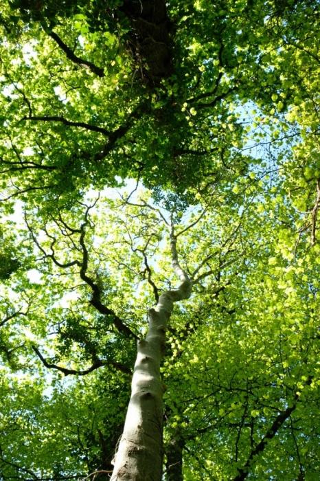 Aspen Wood Belle Isle Lisnaskea Fermanagh Woodlands Co Uk
