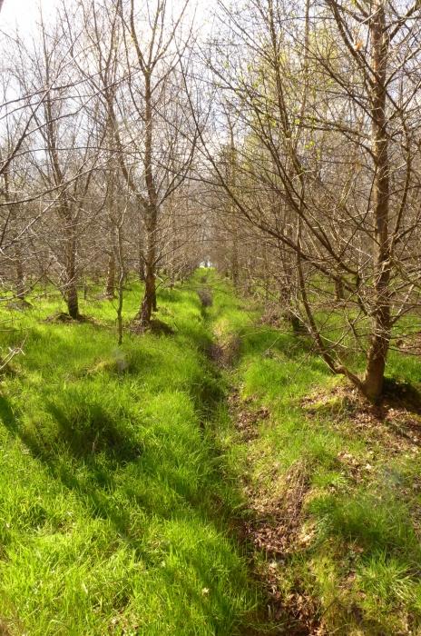 Airy birch woodland