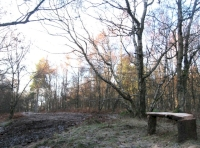 Bench next to clearing