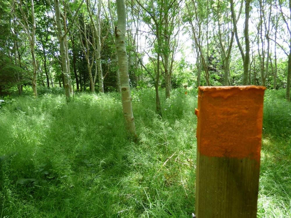 Bowers Wood Bowershall Fife Woodlands Co Uk