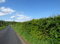 Hedge on road boundary