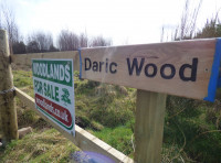 Daric Wood - SOLD