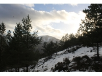 winter light on Schiehallion