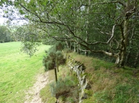 Drystone wall boundary