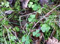 signs of ancient woodland