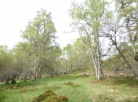 grassland within the woodland