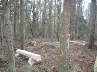 Central clearing and log bench