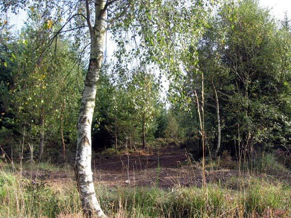 Lournie Wood