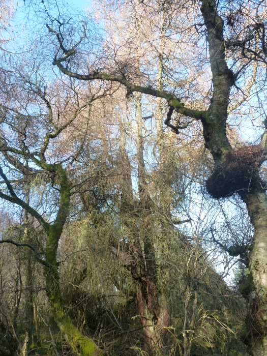 Myrtle Wood Cothal Dyce Aberdeenshire Woodlands Co Uk