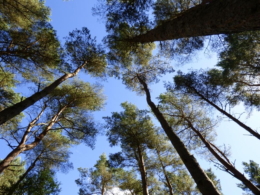Osgar Wood Luthermuir Aberdeenshire Woodlands Co Uk