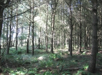 Penmuir Wood