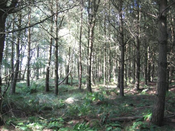 Sunny open woodland