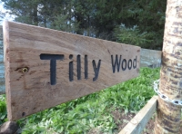 Tilly Wood