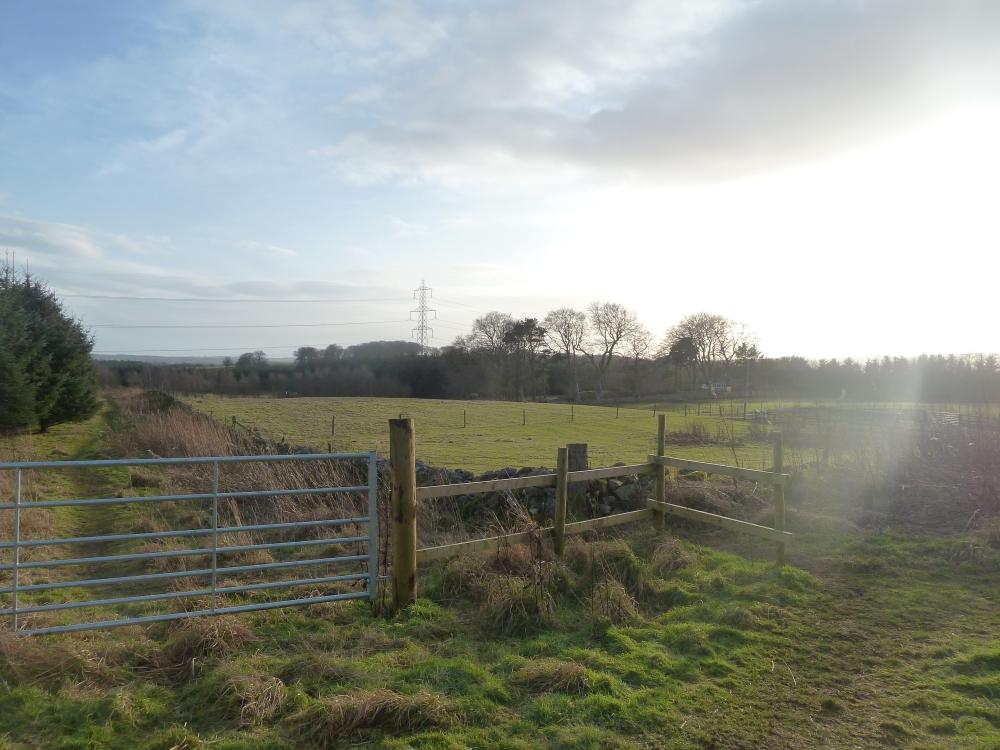 Valan Wood Newmacher Aberdeenshire Woodlands Co Uk