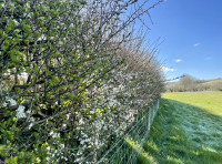 The well established hedgerows provide important habitats for wildlife