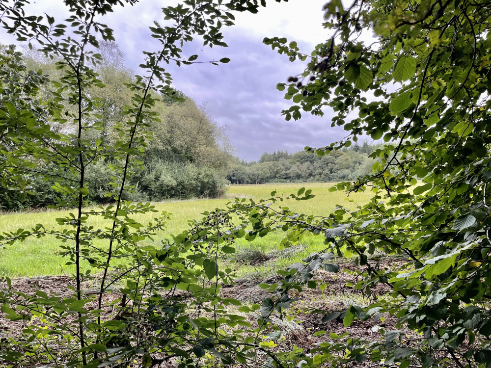 The edge of the woodland
