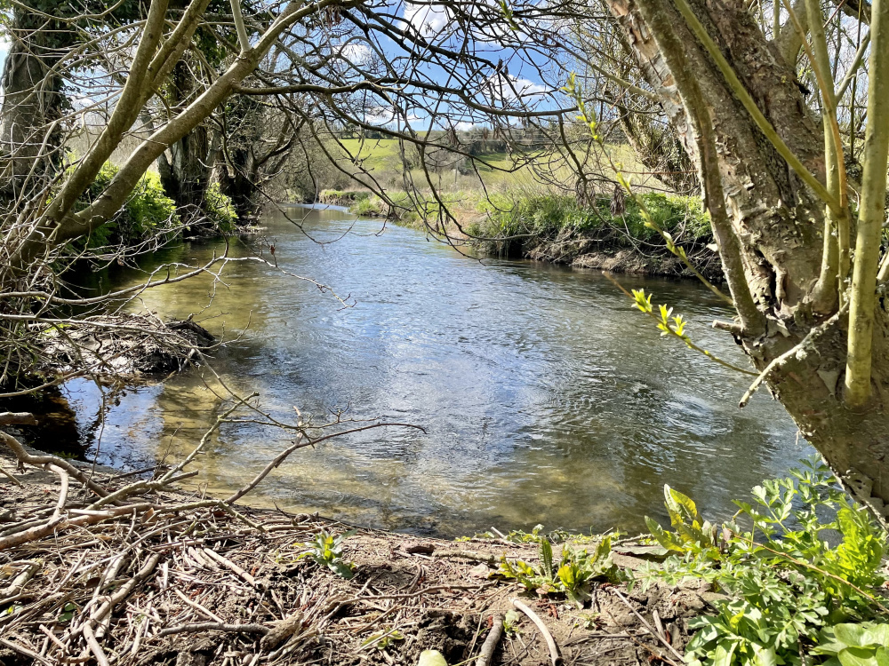 Looking out at the River Frome from the banks