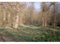 Ashbrook Wood
