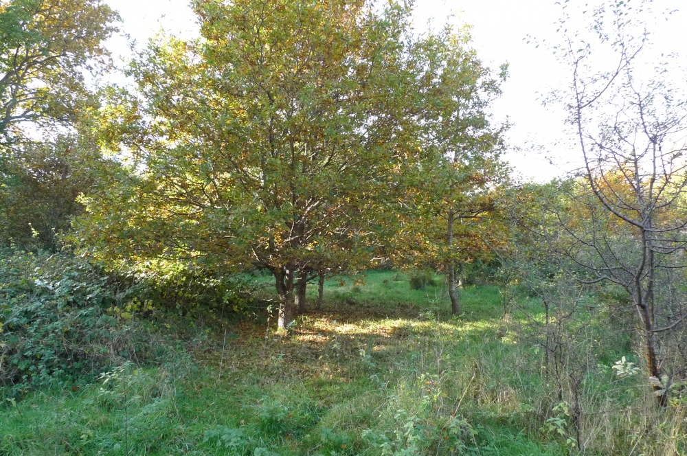 Bridle Wood And Meadow
