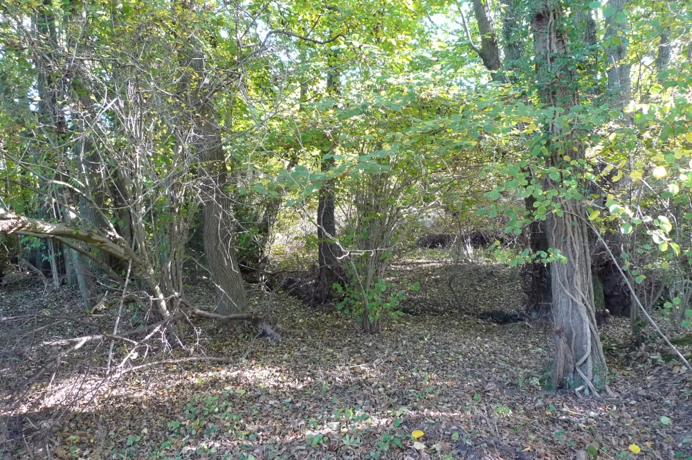 Bridle Wood And Meadow Sold Worsted East Grinstead