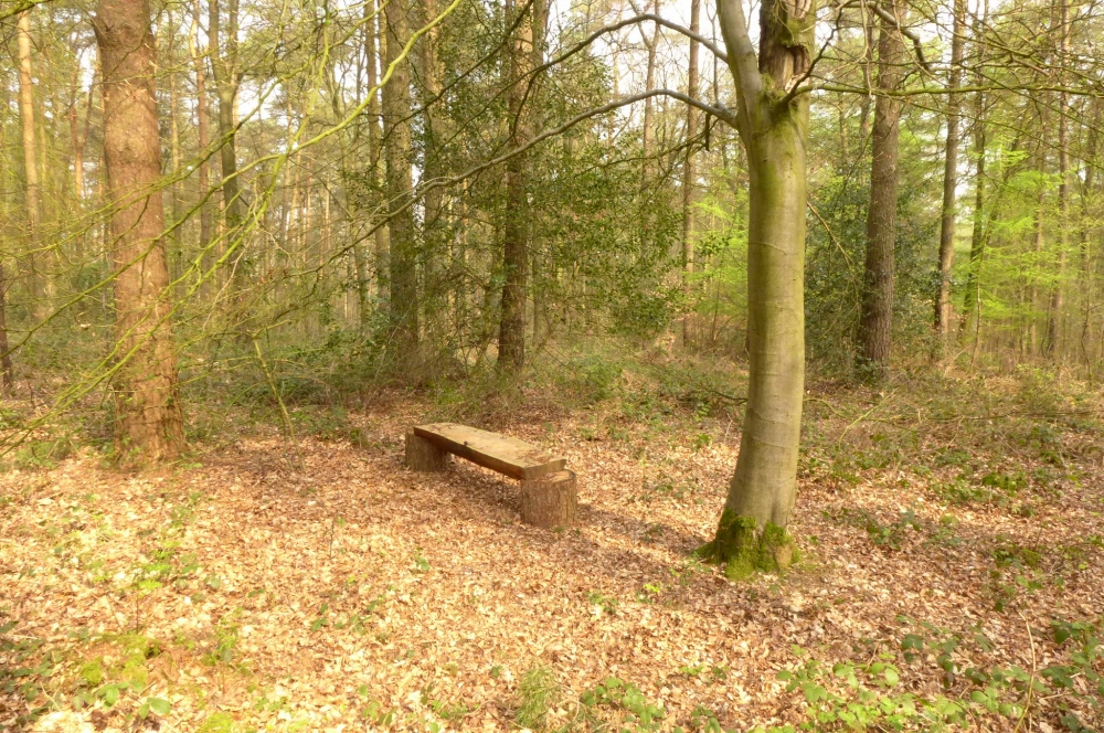 Brightstone Wood