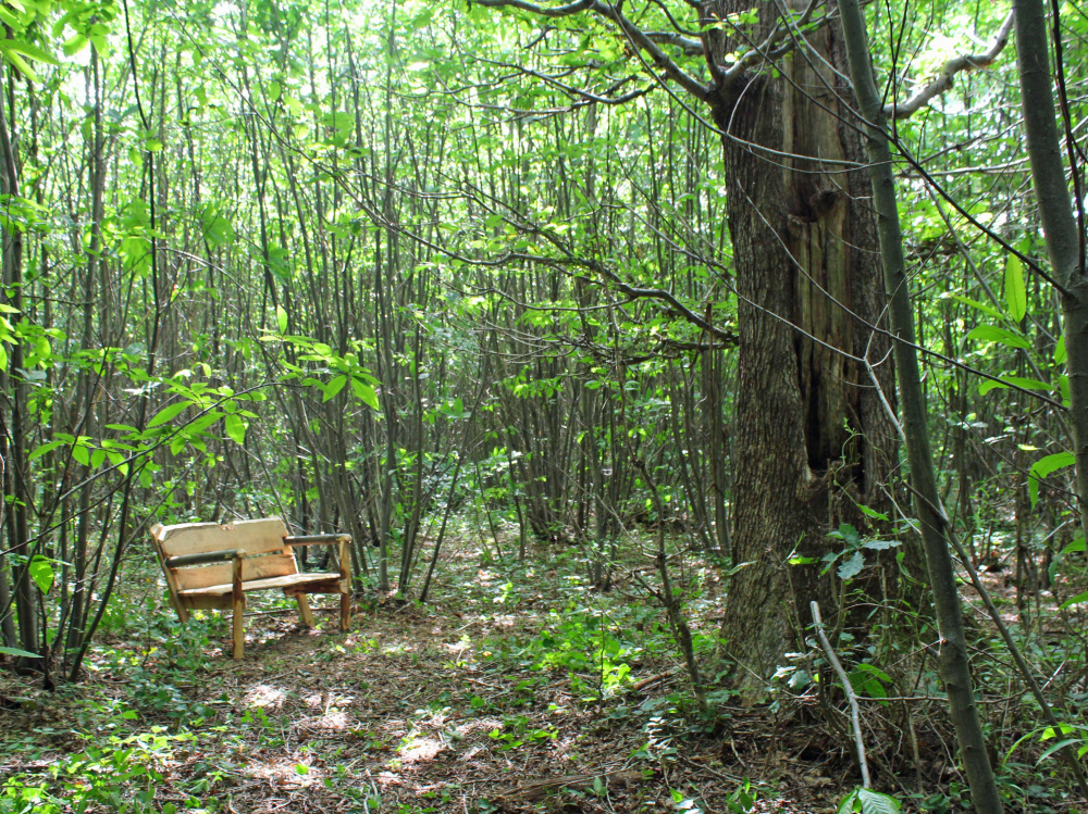A bench in a small clearing