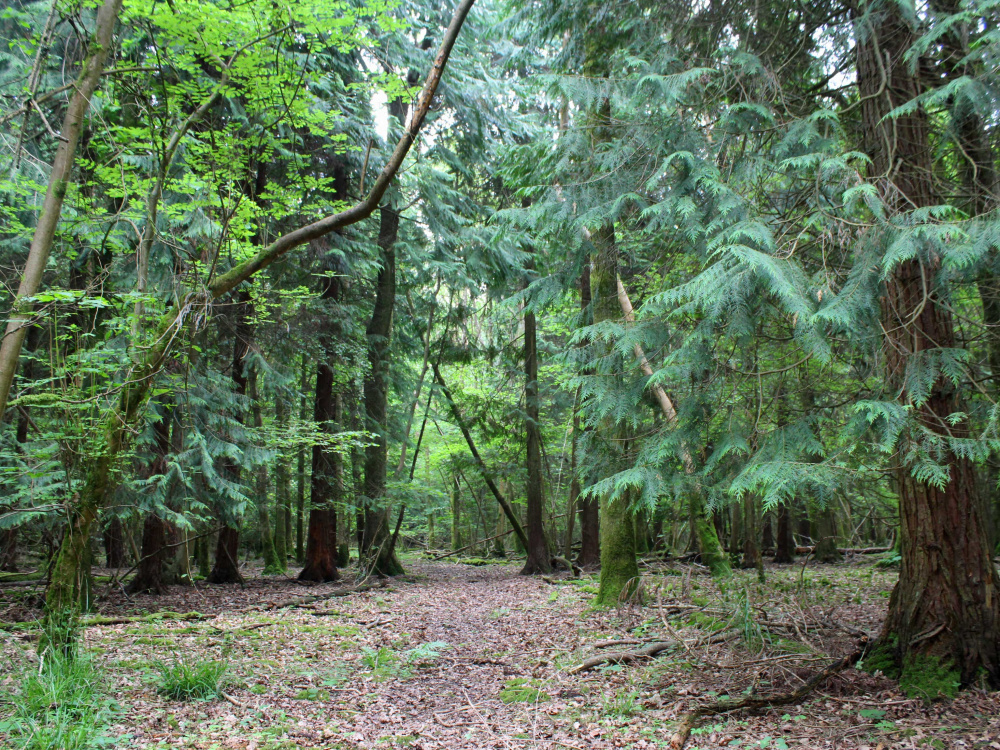 A private walk track in Cleat Wood