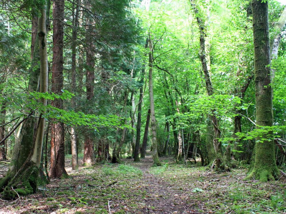 A private walk track in Clove Wood
