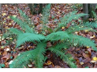 A fern in the wood