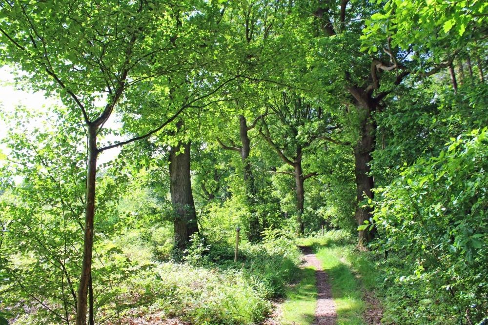 Mature oak along the west boundary