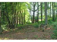 East Pullens Wood - SOLD