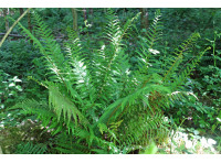 A fern flourishing in the heart of the wood