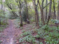 north west boundary path, ancient woodbank