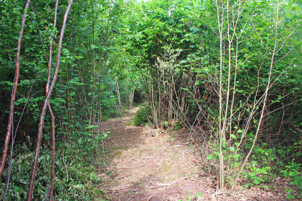 A private walk path in Honeydew Wood