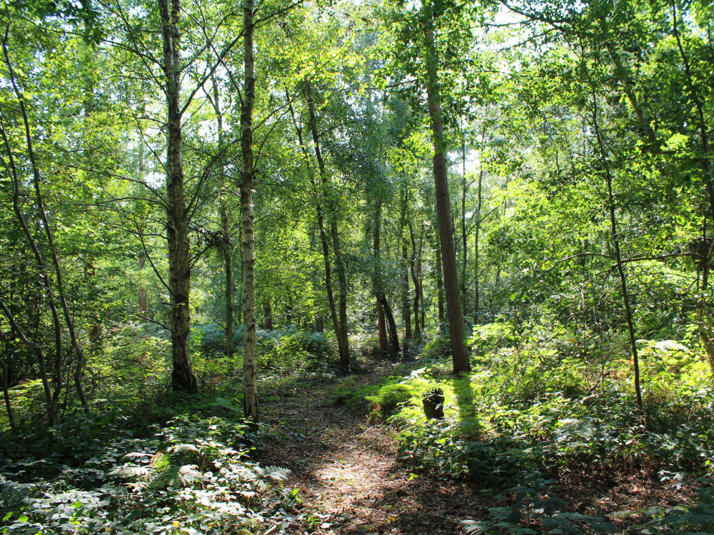 A private walk track in the wood