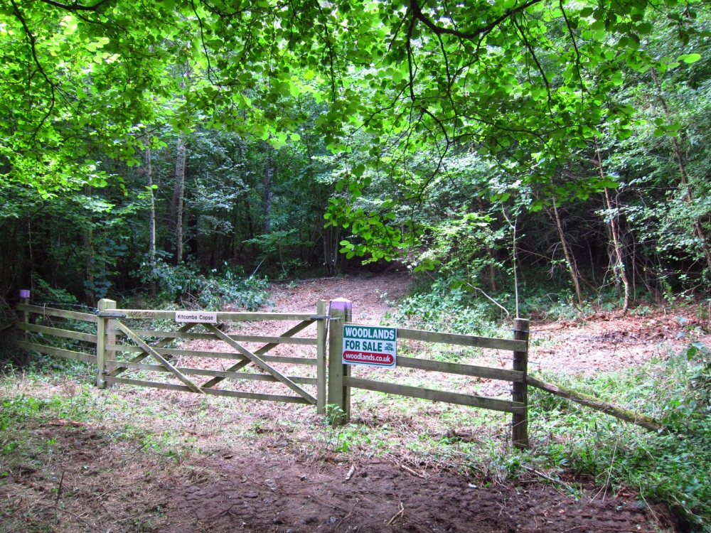 Kitcombe Copse - SOLD