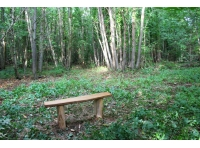 The chestnut seat in the wood