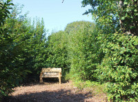 A bench hidden amongst the coppice