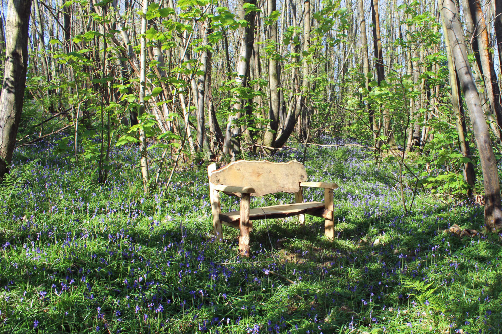 A bench amongst the bluebells and chestnut coppice