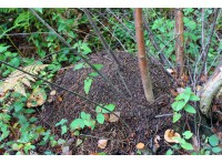 A thatched ant mound